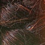WH-12 Dark Brown